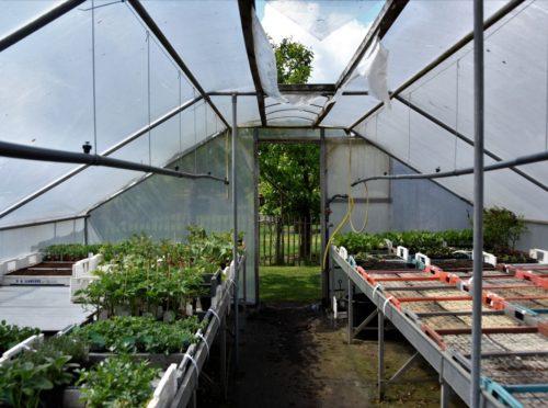 Plantenkwekerij-04